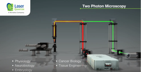Two-Photon Microscopy Video image