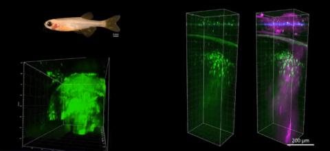 Image for CRONUS for advanced microscopy